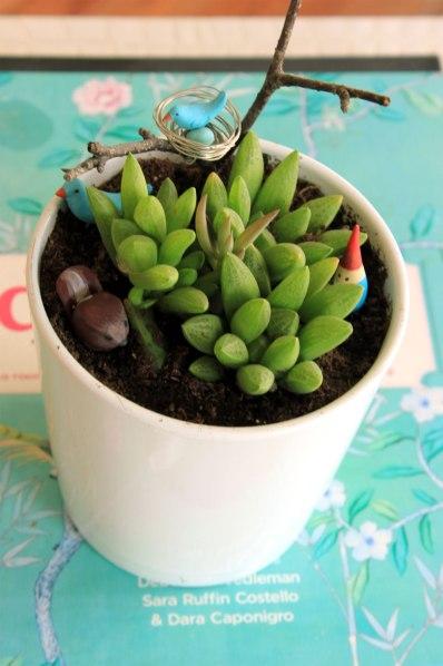 Succulent-Spring-Plant
