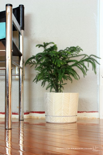 Herringbone-Plant-Pot-with-Norfolk-Pine