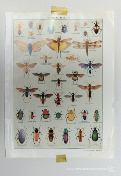 Thrifted-Insect-Page