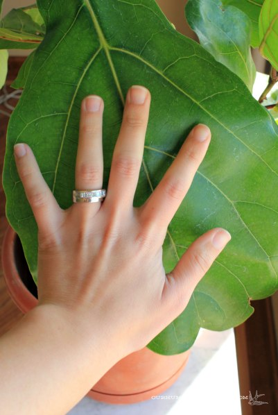 Fiddle-Leaf-Fig-Leaf-Size