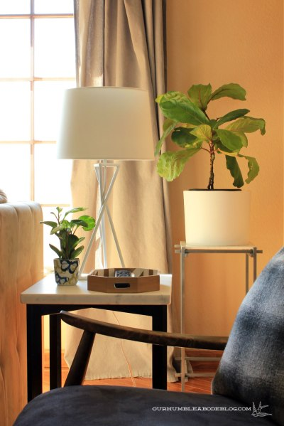 Fiddle-Leaf-Fig