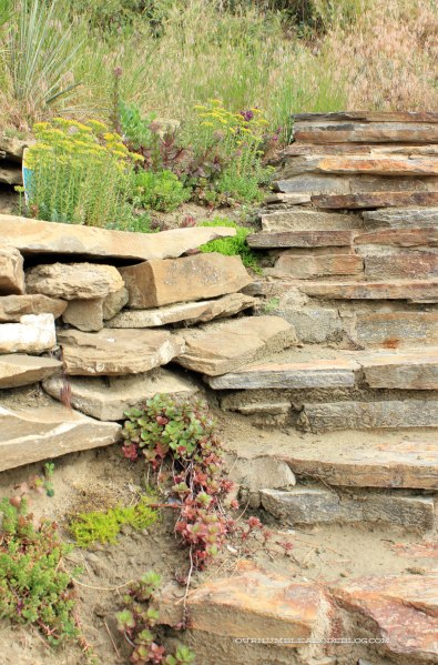 Succulents-Along-Rock-Steps