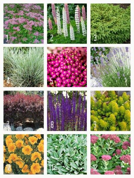 Twelve-Full-Sun-Plants