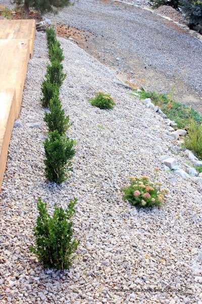 Landscaping-Along-Front-Walkway