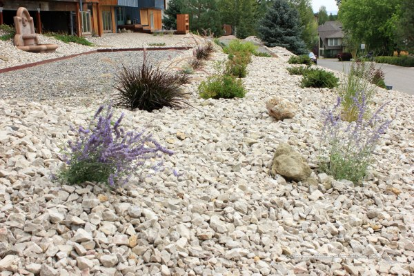 Landscaping-in-Front-Toward-Driveway