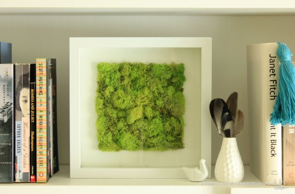 Moss-Art-on-Bookshelves