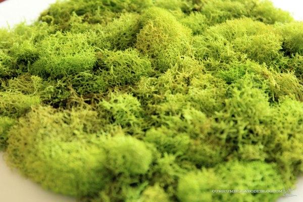 Moss-Art-Texture