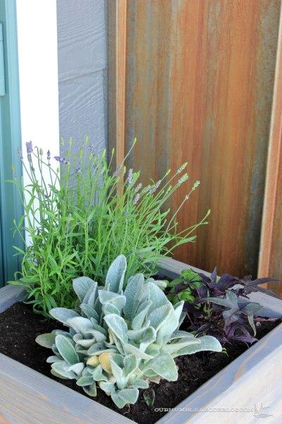 Square-Planter-Box-Top-Detail