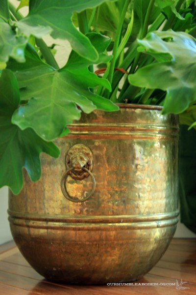 Brass-Lion-Planter