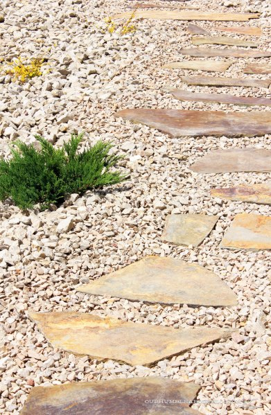 Paver-Walkway-Around-Plants