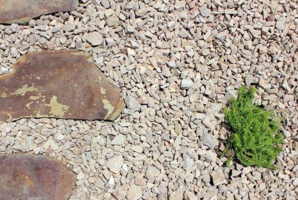 Paver-Walkway-Stonecrop-Detail