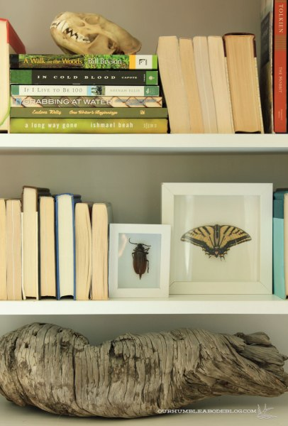Beetle-in-Shadow-Box-on-Shelf