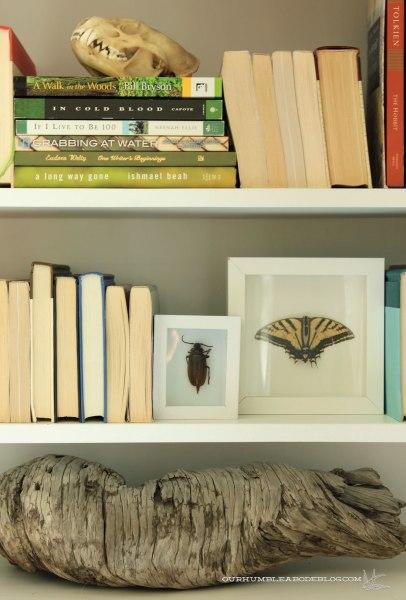Beetle-in-Shadow-Box-on-Shelf