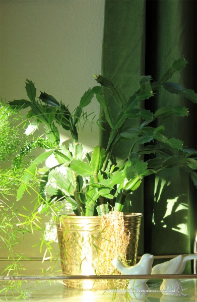 Christmas-Cactus-on-Plant-Stand