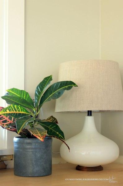 Croton-on-Desk