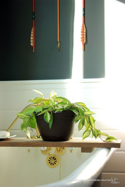 Hoya-Plant-in-Bathroom