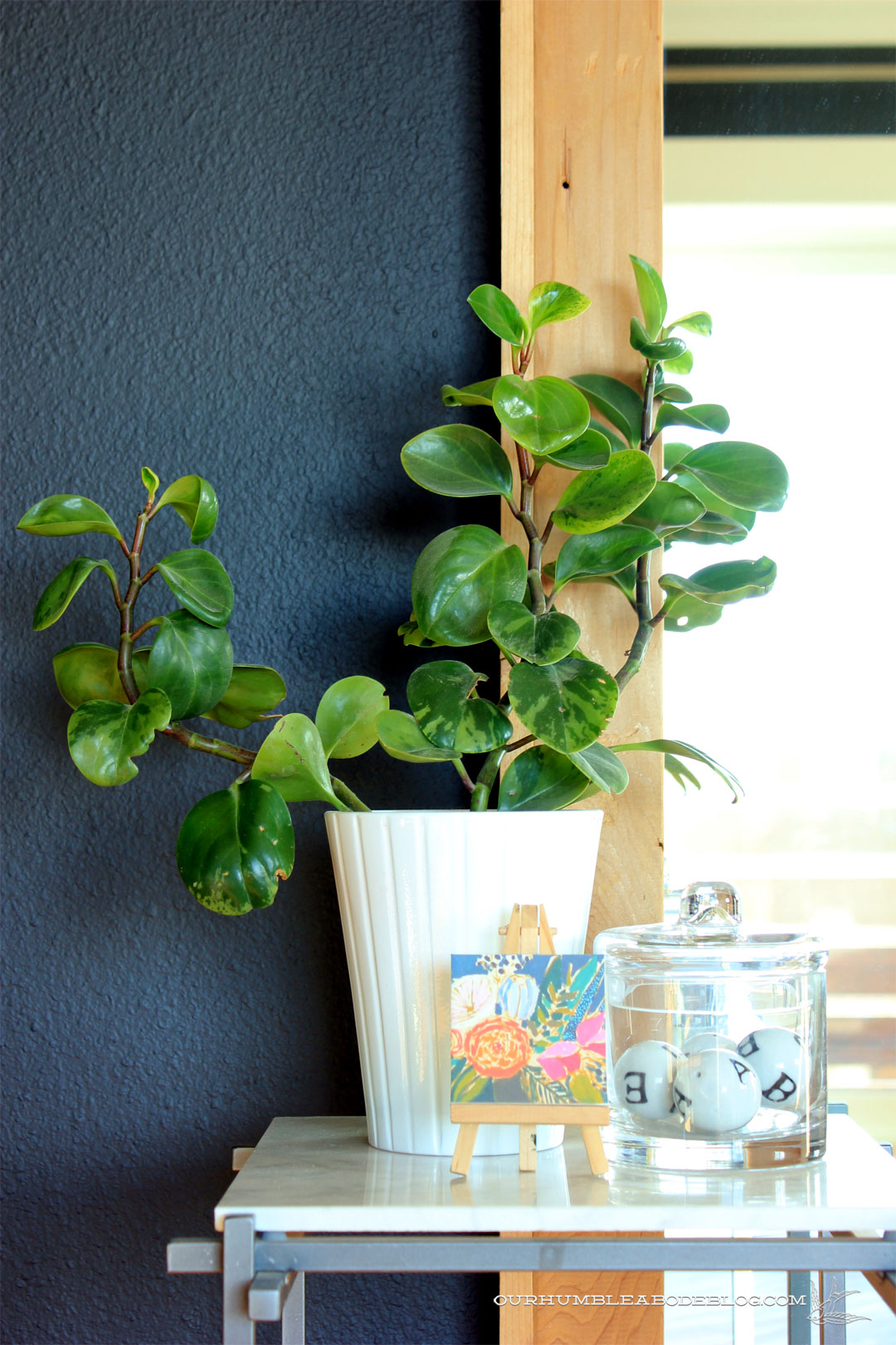 Peperomia-Plant-in-Master-Bedroom