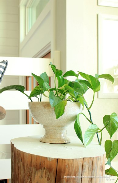 Pothos-in-Living-Room