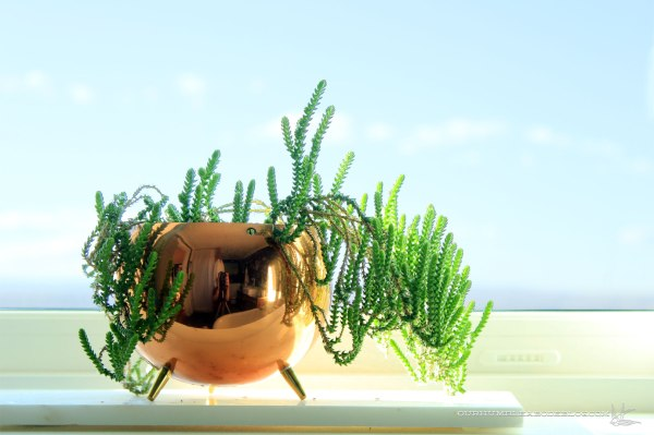 Princess-Pine-Succulent-on-Master-Window