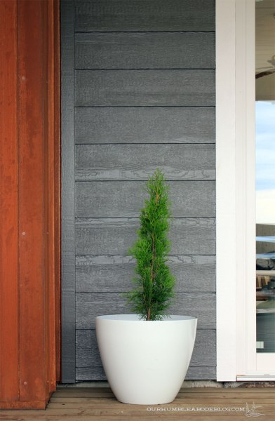 Front-Deck-Potted-Tree