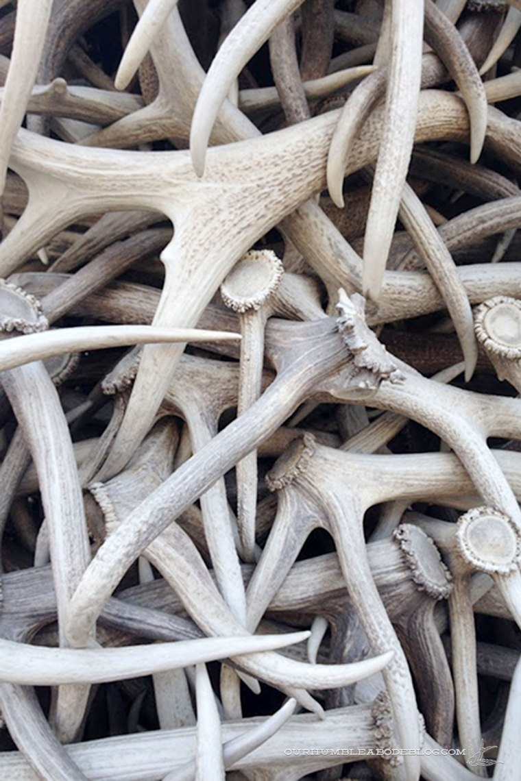 Elk-Antler-Arch-Detail-in-Jackson-Hole-Wyoming